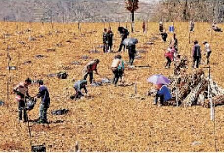凉山州甘洛:驻村帮扶挂图作战 助力群众精准脱贫