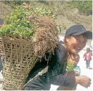 凉山州雷波:驻村干部牵线 群众收入有保障